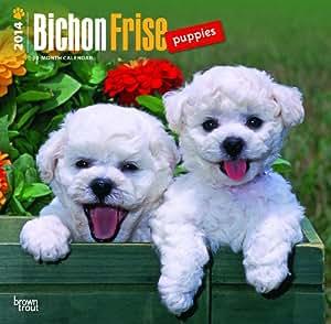 Amazon.com: Bichon Frise Puppies 2014 Wall Calendar: Home & Kitchen