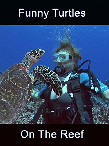 Clip: Funny Turtles On The Reef on Amazon Prime Video UK