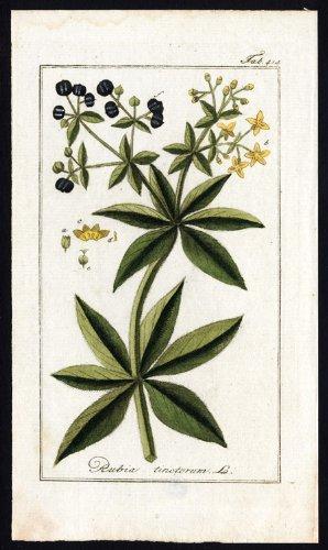 diseno-de-flores-en-la-parte-superior-del-theprintscollector-diseno-de-rubia-tinctorum-tintorero-de-