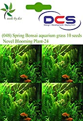 DCS (048) Spring Bonsai aquarium grass 10 Seeds Multi Colored Novel Blooming Plant-24