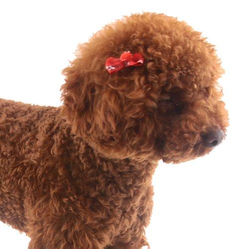 Dog Grooming Supplies Wholesale Usa