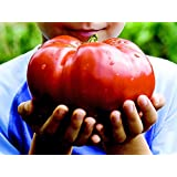 *MONSTER TOMATO* 5 SEEDS **GIANT FRUIT!! #1155