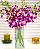 Fresh Flowers - Purple Dendrobium Orchids with Vase