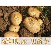 男爵芋 5kg(愛知県 朝六市)自然農法無農薬じゃがいも
