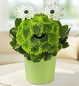 1-800-Flowers - Froggy Flower Pail By 1800Flowers