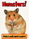 Hamsters! Learn About Hamsters and Enjoy Colorful Pictures - Look and Learn! (50+ Photos of Hamsters)