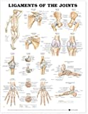Anatomical Chart Company Ligaments of the Joints