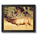 Bull Elk Big Antler Rack Animal Wildlife Cabin Home Decor Wall Picture Black Framed Art Print