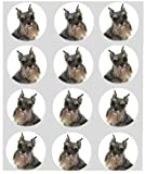 12 dog Schnauzer rice paper fairy cup cake 40mm toppers pre cut decoration