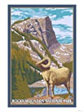 Big Horn Sheep, Rocky Mountain National Park Stretched Canvas Poster Print