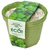 エコット(S):パクチー栽培セット 2個セット[種から育てる栽培セット][地球にやさしいエコポット]