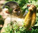 Fred Key Shirts MonKey Identifiers - Set of 6 Monkeys