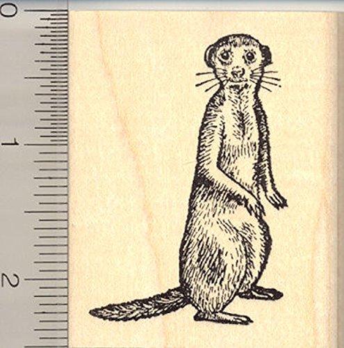 Meerkat Rubber Stamp, Suricate, Desert Mongoose, Kalahari, Namibia, Angola