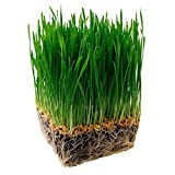 Onewell Organic Wheat grass 3 Packs Planter Tray Cat Grasses With Soil and Seed
