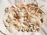 天然ヒトデ2P/ほたて2P/サンゴ/色々な貝殻セット300gナチュラルインテリアハワイ 手作り素材に