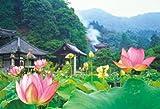 1000p 蓮の彩り(三室戸寺) 71-337