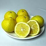 はるか 2kg 熊本産 秀品 M?Lサイズ混合 くまモン箱 はるかみかん オレンジ みかん