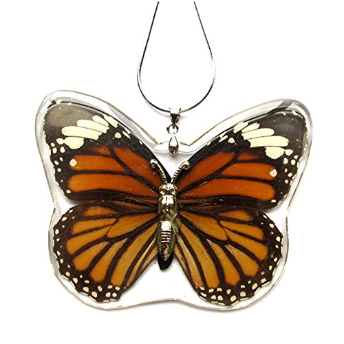 Real Butterfly Necklace And Earring Set For Girls (The Striped Tiger) (Real Insect Company Necklace compare prices)
