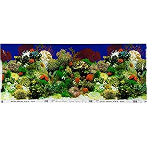 Petco double sided aquarium background for Does petco sell fish