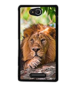 Fuson Premium 2D Back Case Cover lion With Multi Background Degined For Sony Xperia C