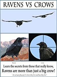 Amazon.com: Ravens vs Crows: Unavailable: Amazon Digital Services