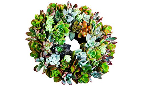 Shop Succulents LIVING-SUC-WREATH-8