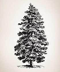 "Vinyl Wall Decal Sticker Pine Tree 84"" Tall x 45"" Wide #658A"