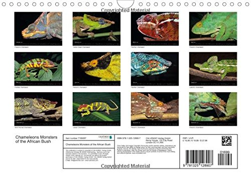 Chameleons Monsters of the African Bush (Wall Calendar 2016 DIN A4 Landscape): Striking Chameleon Portraits (Monthly calendar, 14 pages) (Calvendo Animals)