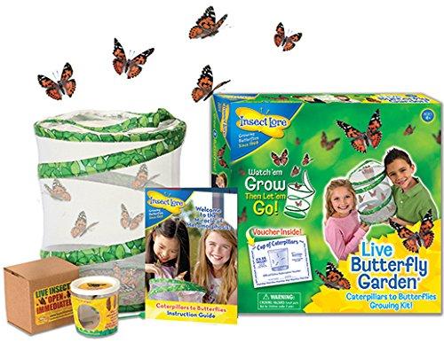 Butterfly Growing Kit