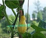 観賞用果実非食用植物の種子、多くの子どもたちヒョウタン、カボチャ小さなおもちゃ、約10粒子