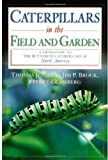 Caterpillars in the Field and Garden: A Field Guide to the Butterfly Caterpillars of North America (Butterflies [Or Other] Through Binoculars)