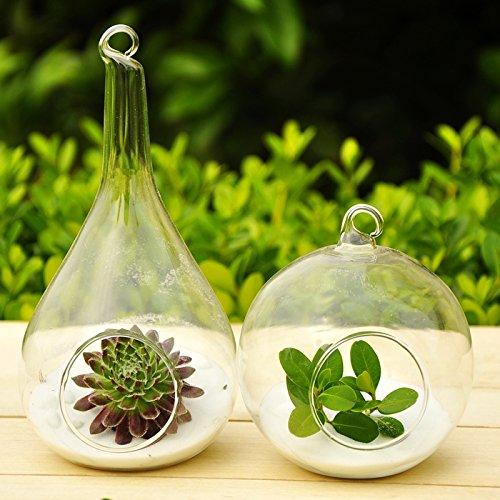 Mkono 2 Pack Hanging Terrarium Glass Vase Flower Plant Pot Container