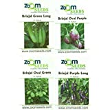 Easy Gardening Brinjal Green Long, Brinjal Purple Long, Brinjal Green Oval, Brinjal Purple Oval F1 Hybrid Root...