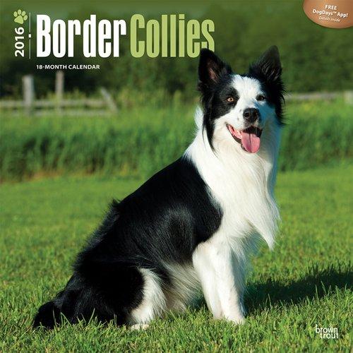 ブラウントラウト 2016年 カレンダー 壁掛け 犬 ボーダーコリー 16-ZB-504034