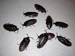 1 X 144 Fake Rubber Cockroaches