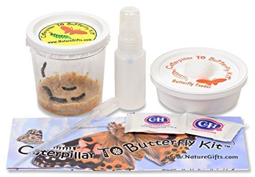 5 Live Caterpillars Shipped Now- Butterfly Kit Refill (Painted Lady Butterfly Kit compare prices)