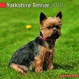 Avonside Publishing Yorkshire Terrier 2014 (Calendar 2014)