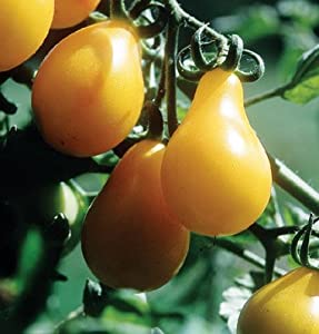 Tomato Yellow Pear 25 Heirloom Seeds by David's Garden Seeds