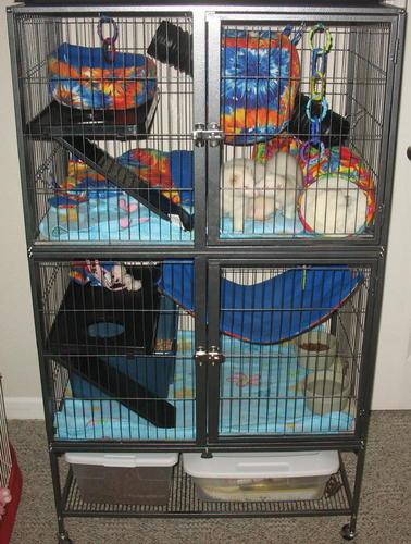 Amazon.com : Prevue Hendryx 485 Pet Products Feisty Ferret ...