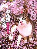 さくらねこ―猫と桜の物語