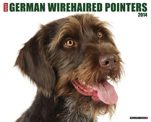 German Wirehaired Pointers 2014 Wall Calendar
