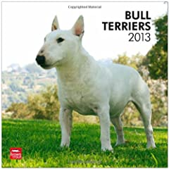 Australian Terriers 2013 Square 12X12 Wall (Multilingual Edition) BrownTrout Publishers