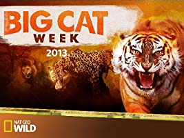 Big Cat Week 2013 [HD]