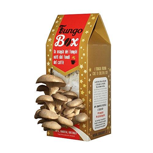 fungo-box-natalizio-il-kit-per-coltivare-in-casa-funghi-ostrica-commestibili-e-buoni-dai-fondi-del-c