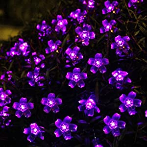 Purple garden lights