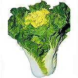 自家用漬物に最適! 花芯白菜