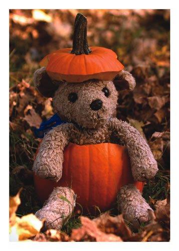 HALLOWEEN W/ TEDDY BEAR IN PUMPKIN