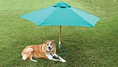 "Dog Yard Tie Out Not Just for Dogs but Cats and Any Other Pet That Need Exercise and Fresh Air. This 14"" Rust-proof Spiral Yard Stake Will Allow Your Pet to Enjoy the Outdoors and Play on the Lawn and in the Yard When You Don't Have a Fence At Home."