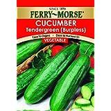 Ferry-Morse 1282 Cucumber Seeds, Tendergreen (2 Gram Packet)