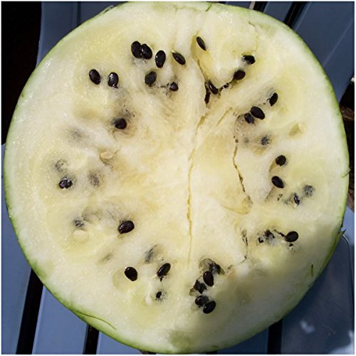 Package of 25 Seeds, Cream of Saskatchewan Watermelon (Citrullus lanatus) Non-GMO Seeds By Seed Needs